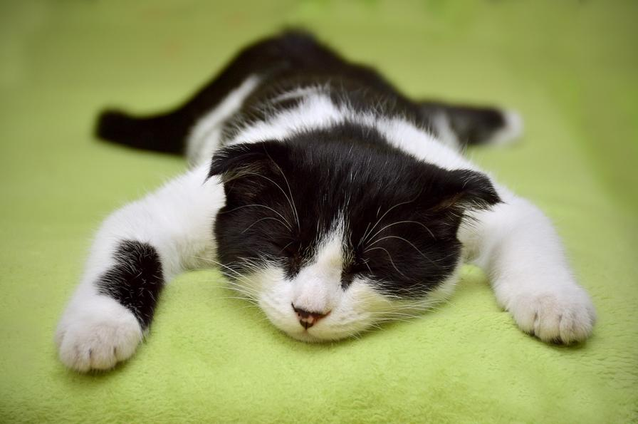 Feeling lazy